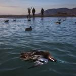 masakra nga zogjve shtagtare ne shqiperise
